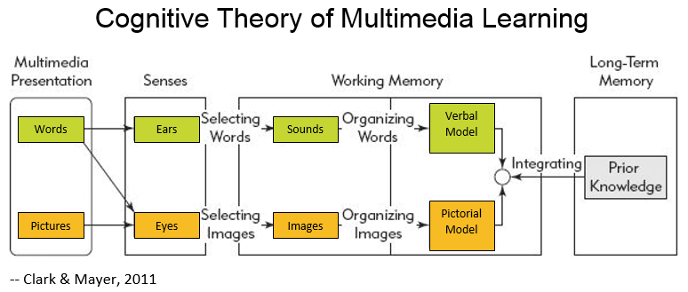cognitive_theory_of_multimedia_learning-PERFORMEX_colors